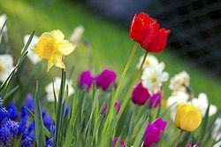 250px-Colorful_spring_garden